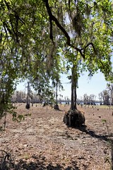 Banks Lake, Georgia (kimshand) Tags: bankslakenationalwildliferefuge bankslake nationalwildliferefuge nature bluetailedskink swamp cypress