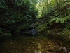 Okinawa subtropical forest (yuyugreen) Tags: 沖縄 日本 森林 自然 okinawa japan nature forest subtropical