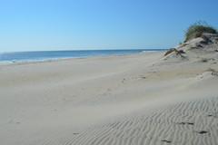 Beach and dunes at Pea Island National Wildlife Refuge (Kyle Hartshorn) Tags: unitedstates northamerica northcarolina outerbanks obx darecounty rodanthe peaisland peaislandnationalwildliferefuge barrierisland atlanticocean ocean beach sand shore shoreline intertidal sandyintertidal beachcombing dune dunes