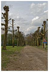 Au train où vont les choses (Jean-Marie Lison) Tags: eos80d bruxelles ganshoren chemin arbres signalisation chemindefer