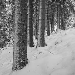 Rolleicord V/Yellow filter/Delta 100/D76 (Jonas.Nilsson) Tags: rolleicord rolleicordv ilfordfilm ilford delta100 d76 mediumformat mf monochrome filmphotography film filmisnotdead winter winterwonderland sweden värmland forest analog analogphotography 6x6 squareformat