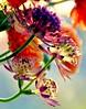 Spring Party (barbara_donders) Tags: natuur nature spring lente kleuren kleurrijk colors colorful bloemen flowers bokeh macro mooi prachtig beautifull magical