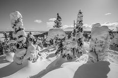 Koli - Finland (Sami Niemeläinen (instagram: santtujns)) Tags: koli suomi finland pohjoiskarjala north carelia lieksa pielinen metsä forest talvi winter lumi snow luonto nature bw monochrome mustavalkea frozen hiking blackandwhite