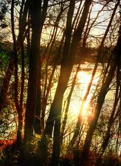 Filigree trees (elphweb) Tags: sun sunset bush bushy forest tree trees woods hdr highdynamicrange nsw australia seaside