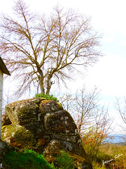 Águas Frias (Chaves) - ... a árvore e a fraga ... (Mário Silva) Tags: aldeia águasfrias chaves trásosmontes portugal ilustrarportugal madeinportugal lumbudus máriosilva abril 2018 primavera árvore fragas fraga