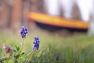 Spring has arrived at Karlsruhe Harbor | SONY ⍺7III & vintage manual Pentacon Prakticar 2.8~4/35~70mm