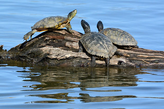 Spring Turtle Convention