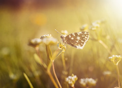 Beautiful spring day (Robert Petrović) Tags: butterfly grass spring sunny glow nature flower day warm sunlight beautiful colorful