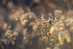 Spring light. (agnieszka.a.morawska) Tags: oldlens helios44m helios dof macro meadow light bokehlicious beyondbokeh bokeh