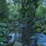 Maunawili Stream thumbnail