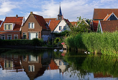 Volendam (Julysha) Tags: volendam pond town birds thenetherlands noordholland d810 nikkor247028 dxo swans gooses evening reflection summer june riet houses dril