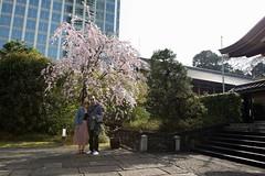 tokyo-blossoms-10 (kchantraine) Tags: japan katieredburn minato street tokyo vacation minatoku tōkyōto jp