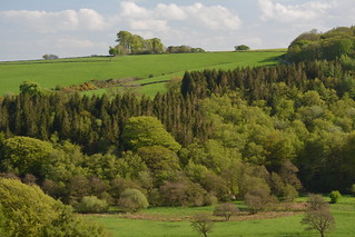 Woodland Beauty, Peak Disrict National Park, Longnor, Staffordshire.