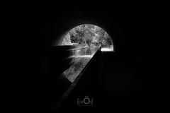 Le bout du tunnel (CrËOS Photographie) Tags: tourcoing hautsdefrance sombre arc graphique lumière perspective canal abstrait arbre eau reflet