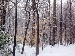 """""""Kindness is like snow. It beautifies everything it covers."""" (shaukat.fatima) Tags: snowfall snow cold plants trees branches nature beautiful colors landscape woods winter"""
