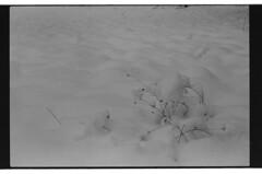 P59-2018-021 (lianefinch) Tags: argentique argentic analogique analog blackandwhite blackwhite bw noirblanc noiretblanc nb monochrome neige snow minimalism minimalisme minimaliste