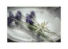 Invitation (Krasne oci) Tags: stilllife flowerart flowers evabartos artphotography photographicart texturedphoto invitation canon fineart