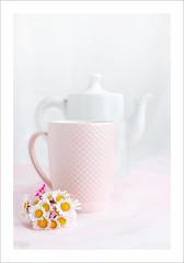 Composition (P@ti16) Tags: naturemorte blanc rose