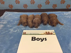 Dakota Boys pic 2 4-8