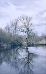 The Tree (HikerandBiker) Tags: a7rm3 ilce7rm3 sony sonya7rm3 sonyalpha7rm3 sonyfe2470mmf4zaoss taubergiesen