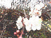 0005.jpg-0012.jpg-0003.jpg-Or-Or (troutcolor) Tags: imagemagick victoriapark spring bash experiment random