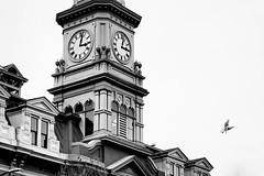 City Hall, Victoria BC (Joel Apple) Tags: victoria northamerica things time clock britishcolumbia clean clocktower seagul vancouverisland bird animals architecture canada pacificnorthwest blackandwhite places cityhall