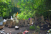 Trunyan Village Graveyard, Bali 2 (Petter Thorden) Tags: bali indonesia kintamani lake gunung batur trunyan