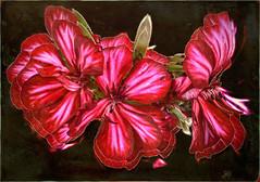 "Glowing Flowers DSC_0028 (crimsontideguy-from ""Sweet Home Alabama"" USA) Tags: art digitalart experimental flowers glow photoshop nikon"