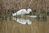 Birdfishing (Cristiano Pelagracci) Tags: birds garzetta oasi alviano nature umbria