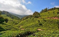 India - Kerala - Munnar - Tea Plantation - 45 (asienman) Tags: india kerala munnar teaplantagen asienmanphotography