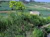 Des rangs et des aplats (cefran_other) Tags: valley illunzjatarabat lonesometree