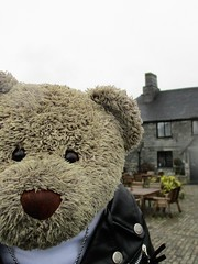 Dad, can we stop fer a drink? (pefkosmad) Tags: tedricstudmuffin teddy ted bear cute cuddly animal toy stuffed soft plush fluffy holiday week holibob cottage cornwall bodmin cardinham westcountry westsidecottage daysout trips touring tourist tourism adventures book novel daphnedumaurier jamaicainn
