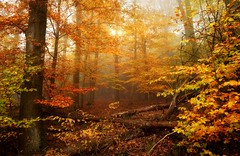LostSomewhere (BphotoR) Tags: forest fogs nebel wald woods bphotor autumn herbst november leaves lost