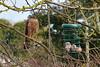 Waiting patiently (AndyorDij) Tags: sparrowhawk accipiternisus raptor birdofprey england empingham rutland uk unitedkingdom andrewdejardin 2018 birds bird birdfeeder