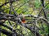 Bird (JCMCalle) Tags: oiseau bird ave pájaro jcmcalle photohoot fhotografy photofrapher nofilter naturaleza nature naturephotography nofilters árbol
