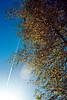 contrails and flare (mkk707) Tags: analog wwwmeinfilmlabde leicaflexsl2 summicronr50mm kodakektar100 film 35mmfilm contrail lensflare itsaleica vintagelens vintagefilmcamera autumn