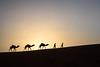 Sunrise in the desert 2 (Esther Kluth) Tags: 2018 marokko kamel camel