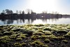 TGIF! (andtor) Tags: zeuthen brandenburg moos zeuthenersee ufer germany lakeside moss macro freitag friday morgen morgens morning explore explored
