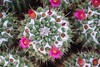 DSC_0356 (LauraLizzie) Tags: 387 arizona april2018