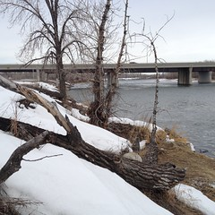 Fallen Tree-Mendous Tuesday (Mr. Happy Face - Peace :)) Tags: htmt bowriver yyc cowtown calgary alberta canada art2018