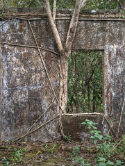 The Hostile Jungle (ORIONSM) Tags: kampot cambodia blackpalace bkor jungle abandoned building reclaim nature plant trees olympus omdem1 olympus14150mm