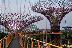 Gardens by the Bay 2018 (Roberto Maldeno) Tags: gardens bay singapore marina trees