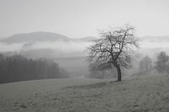 ♣ (cнαт-ɴoιr^^) Tags: imgp2748 frühling spring lente primavera printemps nebel mist monochrom