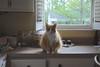 Jimmy wants me to come closer. (rootcrop54) Tags: jimmy orange tabby male cat striped longhair neko macska kedi 猫 kočka kissa γάτα köttur kucing gatto 고양이 kaķis katė katt katze katzen kot кошка mačka gatos maček kitteh chat ネコ