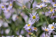 DN9A4497 (Josette Veltman) Tags: garden tuin tuinfoto groen natuur nature garten jardin flowers bloemen