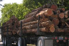Redwood logging truck Highway near Garberville in Humboldt County northern California 070731-153646 C4 (Wambeke & Wambeke Photography, Art, & Textiles) Tags: northerncalifornia redwoodtrees cutredwoodtrees loggingtruck highway101 charliewambekephotography charliesphotoart charliewambekephoto charliewambekephotograph charliesphotoartcom nikoncoolpixe8800photograph nikone8800photo nikone8800photograph
