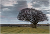 Treescape (Steven Peachey) Tags: landscape trees canon treescape ef70200mmf4l 5dmarkiv lightroom leefilters lee09gnd stevenpeachey canon5dmarkiv farmland countydurham lonetree