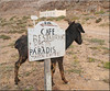 no pardise for the little donkey (mhobl) Tags: donkey esel beach morocco maroc sign