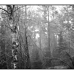 Wald bei Lommersdorf 1/3 thumbnail