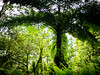Backlit Fern (lunkerbuster808) Tags: green fern hiking nature hawaii kauai gx85 lumix 25mm